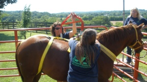 Ready for lift off....with e Horse Rescue Sling